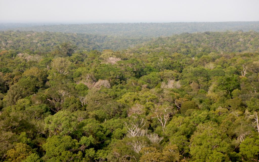 rainforest surrounding ATTO