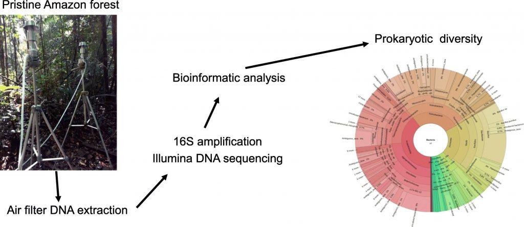 Dias‐Júnior et al. (2019) analysed prokaryotic diversity from DNA in the Amazon