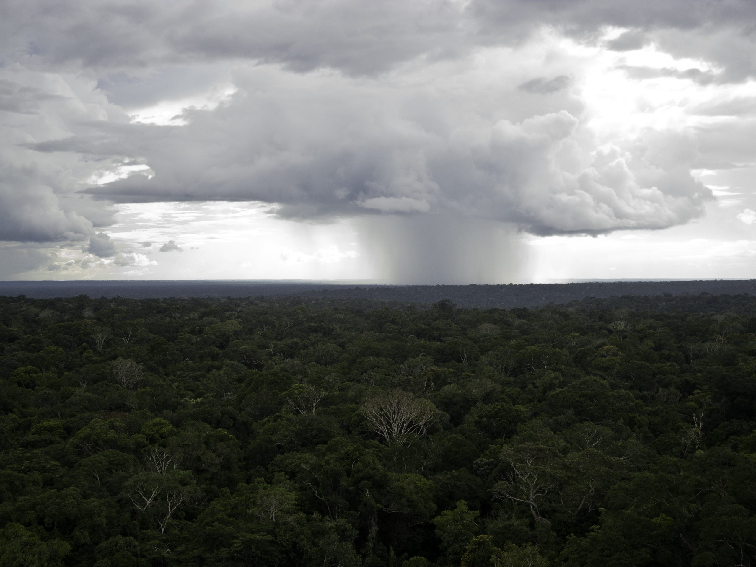 convective storm over the forest