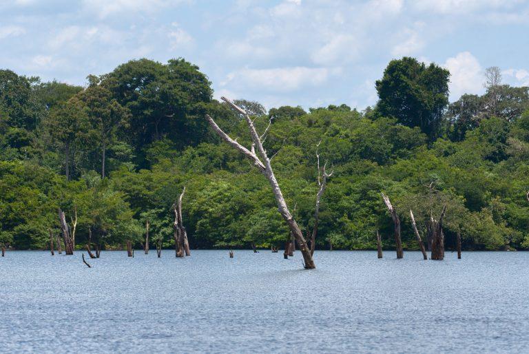 Drowned trees in the Uatuma River. © Martin Kunz / MPI-BGC.