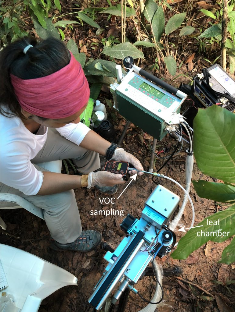 Eliane measures VOC emissions of leafs with the IRGA, a gas analyzer.