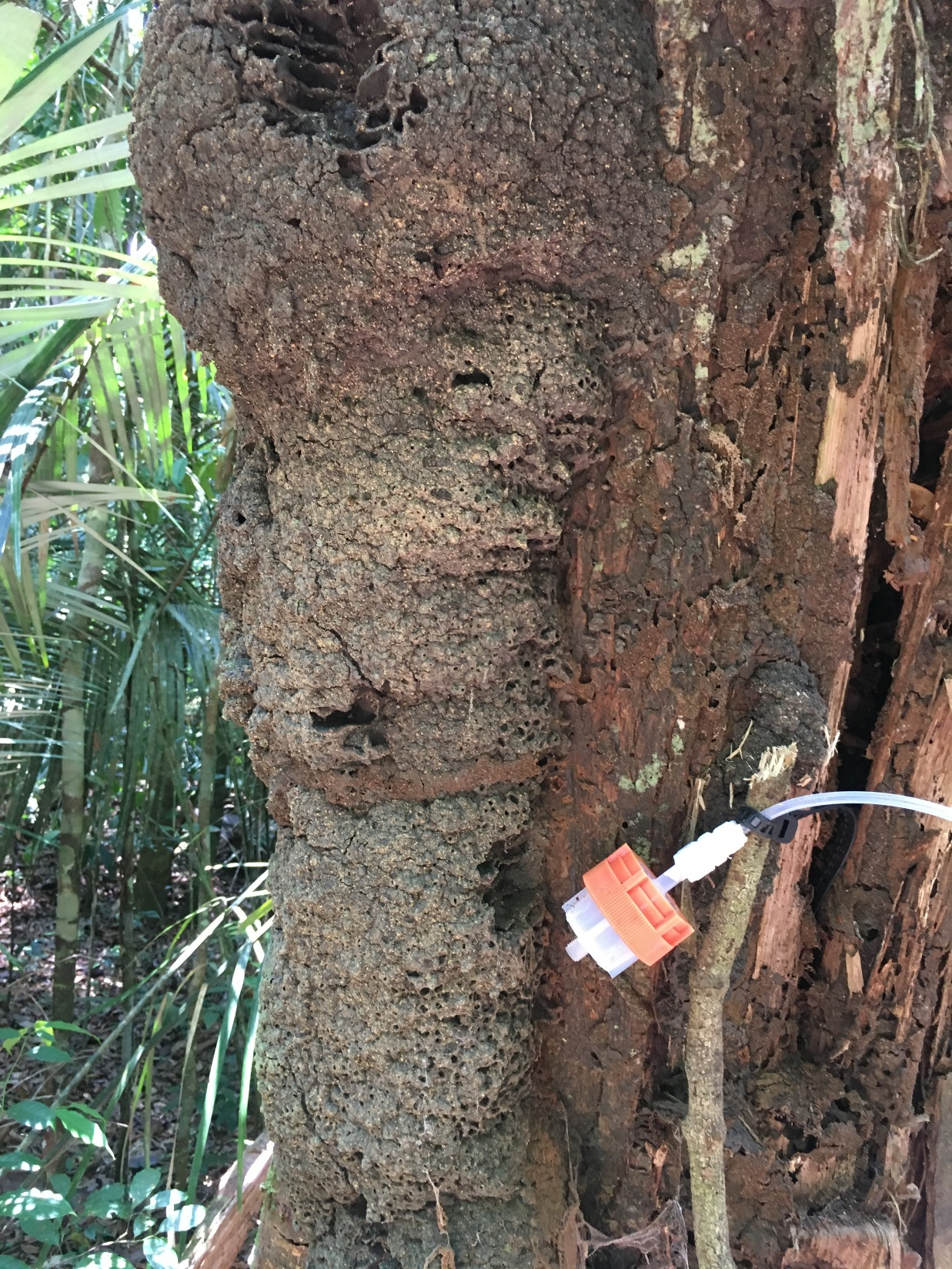 """<span  class=""""uc_style_uc_tiles_grid_image_elementor_uc_items_attribute_title"""" style=""""color:#ffffff;"""">measuring BVOC emissions from termite nests on trees. © Nora Zannoni / MPI-C</span>"""