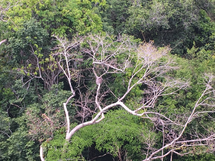 """<span  class=""""uc_style_uc_tiles_grid_image_elementor_uc_items_attribute_title"""" style=""""color:#ffffff;"""">We can even spot termite nests high up in the tree canopy from the tower. © Nora Zannoni / MPI-C</span>"""