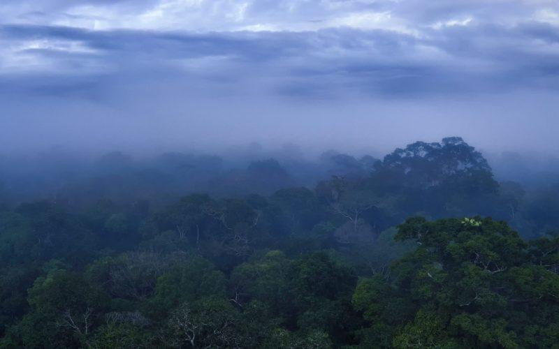 rainy day in the Amazon rainforest
