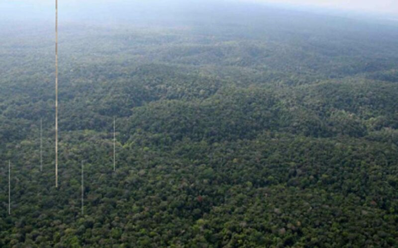 Photo of the Amazon rainforest into which 4 towers are manipulated: a very tall tower in the center and 4 smaller towers surrounding in like a square.