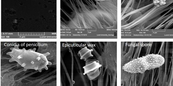 SEM images of different types of bioaerosols. @Sachin Patade / Uni Lund
