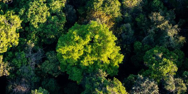Vogelperspektive des Amazonas-Regenwaldes © Paulo Brando