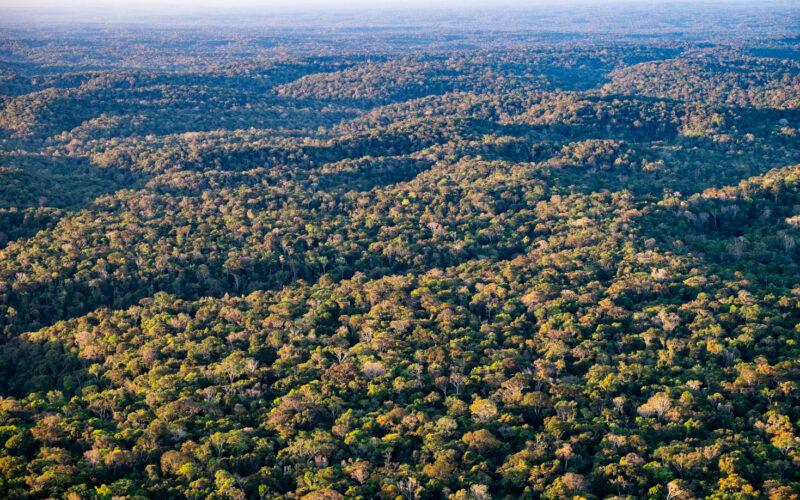 Licht und Schatten einer tief stehenden Sonne heben die sanfte Topographie unter dem Amazonaswald hervor, was sich auf die atmosphärischen Turbulenzen auswirkt. © Paulo Brando