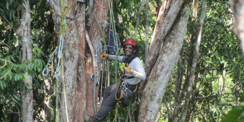 Pedro climbing in the Amazonian trees to collect data