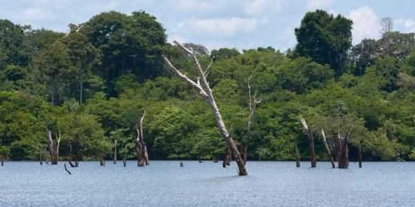 Árvores afogadas no rio Uatuma. © Martin Kunz / MPI-BGC.