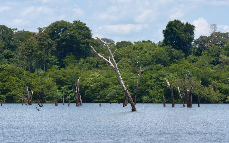 Überflutete Bäume im Uatuma-Fluss. © Martin Kunz / MPI-BGC.