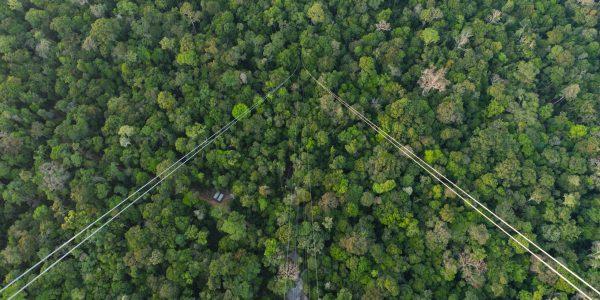 ATTO Camp; Brasilien; Gebiet