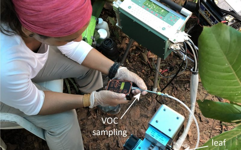 Eliane measures VOC emissions of leafs with the IRGA, a gas analyzer.
